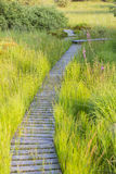Footpath Through Green Bog Landscape In The High Fens, Belgium Royalty Free Stock Photos