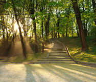Footpath in green city park, lighted rays of sunset Royalty Free Stock Images