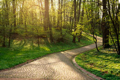 Footpath in green city park, at sunset Stock Photo