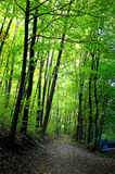 Footpath through green forest. Footpath through a beautiful green forest Stock Photos