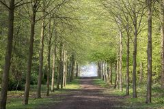 Footpath through Green Forest of Beech Trees in Spring.  Stock Photography