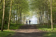 Footpath through Green Forest of Beech Trees in Spring with two people walking dogs in the distance. Footpath through Green Forest of Beech Trees in Spring with Stock Photography
