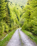 Footpath in green forest. Of Bieszczady Mountains, Poland Stock Photography