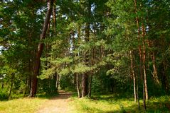 Footpath through a green forest with old trees Stock Photos