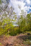 Footpath through green forest in springtime. Lovely nature scenery Royalty Free Stock Images