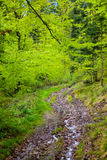 Footpath in green forest. Summer or spring . tall trees Stock Photo