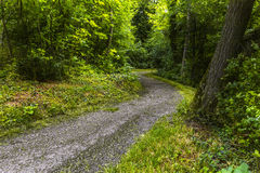 Footpath in green forest of Wienerwald near Vienna. Footpath in green forest of Wienerwald (Viennese Forest) near Vienna, Austria Royalty Free Stock Images