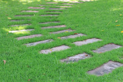 Footpath. Green grass in garden Stock Photography