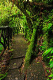 Footpath in green tropic forest. Trail in La Paz Waterfall gardens, with green tropical forest in Costa Rica. Mountain tropic fore Royalty Free Stock Photos