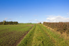 Footpath and hedgerows Royalty Free Stock Photos