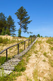 Footpath on a hill to pines Stock Photos