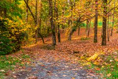Footpath and hillside with many trees and dry leaves. Landscape with many trees and dry leaves lying on a hillside and footpath in Arboretum in sunny autumn day Stock Photography