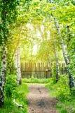 Footpath iść przez brzoza gaju płotowi lata łąkowi słoneczniki drewniane sunlight obraz royalty free