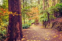 Footpath intersection in a tropical forest in Fall. Melbourne, Australia Royalty Free Stock Images