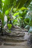 Footpath in the jungle. Valle-De-Mai Natural Reserve in Praslin Island, Seychelles royalty free stock photo