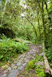 Footpath in the jungle Royalty Free Stock Images