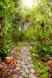 Footpath in the jungle. Footpath in the rainforest at Manu National Park, Peru royalty free stock images
