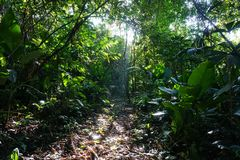 Footpath in the jungle of Costa Rica Stock Photo