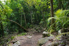 Footpath jungle Huahine French Polynesia Pacific Royalty Free Stock Photography
