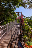 Footpath in jungle - Tenerife Canary islands Stock Image
