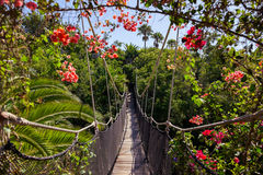 Footpath in jungle - Tenerife Canary islands Stock Photo