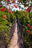 Footpath in jungle - Tenerife Canary islands Royalty Free Stock Photography