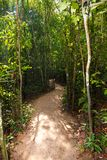 Footpath  in the jungles Royalty Free Stock Photos