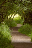 Footpath leading through majestic green forest. Stock Photos