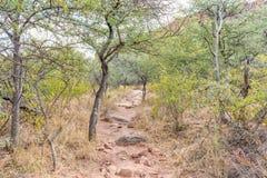 Footpath leading to the Waterberg Mountain Plateau near Otjiwaro Royalty Free Stock Photo