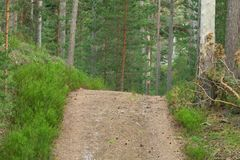 Footpath leading through an untouched pine forest Royalty Free Stock Photography