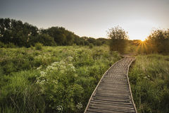 Footpath leading through wild meadow sunrise landscape in Summer Royalty Free Stock Photos