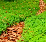 Footpath of leaves among clovers Royalty Free Stock Photography