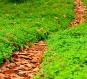 Footpath liście wśród koniczyn Fotografia Royalty Free