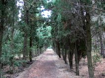 Nice soft walk between trees royalty free stock image