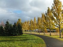 Footpath lined with birch trees in autumn. In Reykjavík, Iceland. Slanted sunlight casting long shadows stock photos