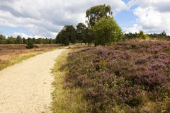Footpath through the Lueneburg Heath Stock Image