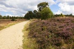 Footpath through the Lueneburg Heath Stock Image