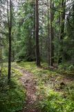 Path in a forest in Finland Stock Image