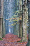 Footpath with majestic Beeches Royalty Free Stock Photography