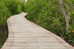 Footpath between mangrove Stock Images