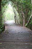 Footpath between mangrove forest Royalty Free Stock Images