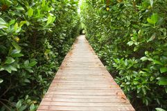 Footpath between mangrove forest Royalty Free Stock Photos
