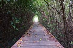 Footpath between mangrove forest Stock Photos