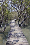 Footpath into mangrove forest swamp. Entrance to a mangrove forest new zealand with raised decking walkway royalty free stock photo