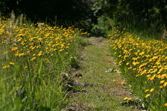 Footpath through the meadow Royalty Free Stock Image