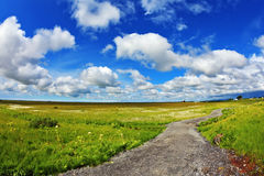 Footpath among the meadows. Warm summer days in Iceland. Footpath among the green meadows stock photo