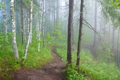 Morning in the misty forest. Footpath in the morning misty forest stock image