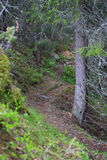 Footpath in mountain forest Stock Image