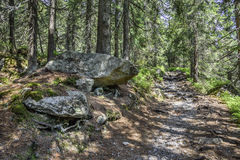 Footpath in mountain green forest. Slovak High Tatras Royalty Free Stock Images