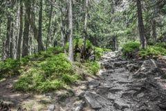 Footpath in mountain green forest. Slovak High Tatras Stock Photos